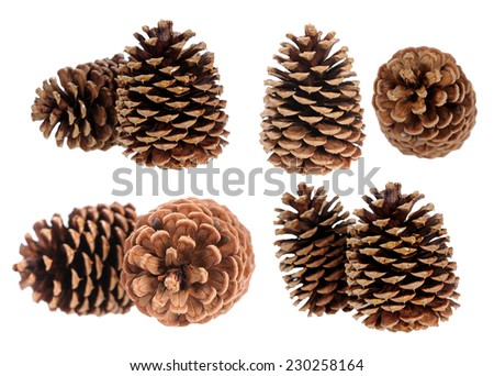 two pine cone isolated on white - stock photo