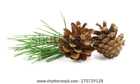 Two pine cones isolated on a white background - stock photo