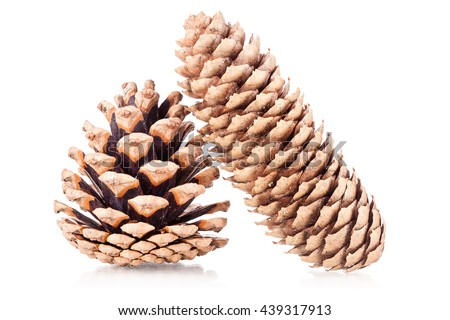 two pinecones isolated on white background