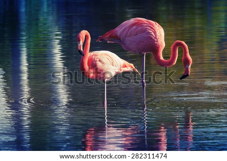 Two pink flamingos standing in the water with reflections. Stylized photo with colorful tonal correction old style filter effect - stock photo