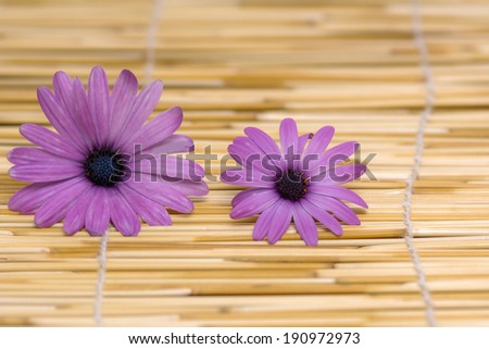 Two pink Gerber flowers, daisies and bamboo mat background