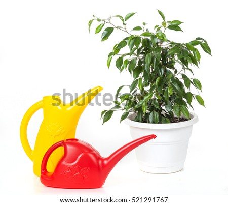 two plastic watering cans and plant in a pot on the isolated white background