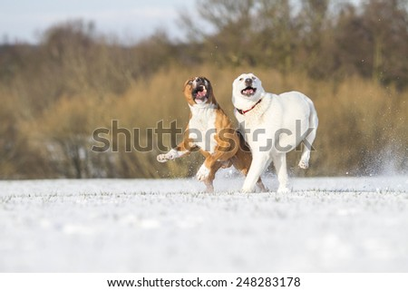 Two playing dog in snow