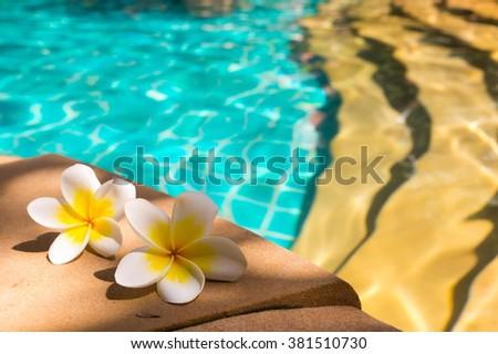 Two plumeria flowers lying near pool - stock photo