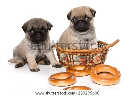 Two pug puppy sitting in a basket, and looking at the camera (isolated on white) - stock photo