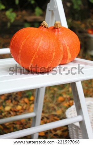 Two pumpkins on white chair in the garden - stock photo