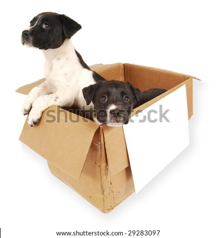 Two puppies in a cardboard box with a blank sign on front. - stock photo