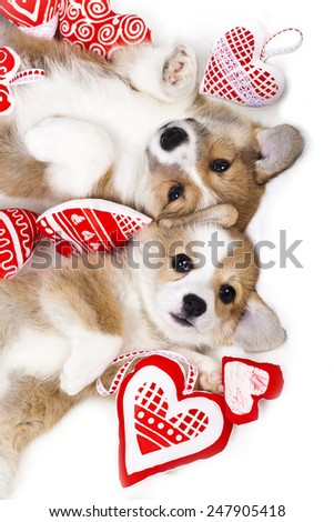 two puppies in each other's arms - stock photo
