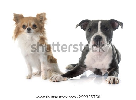 two puppies in front of white background