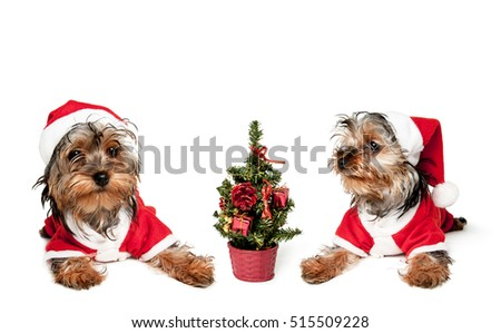 Two puppies in red Santa hats