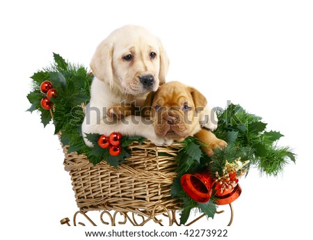 Two puppies in the Christmas sledge.