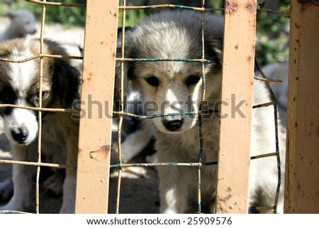 Two puppies look through the bars of a cage
