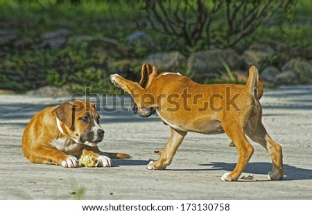 Two puppies play with each other. - stock photo