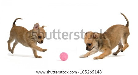 Two puppies playing ball, isolated on white background - stock photo