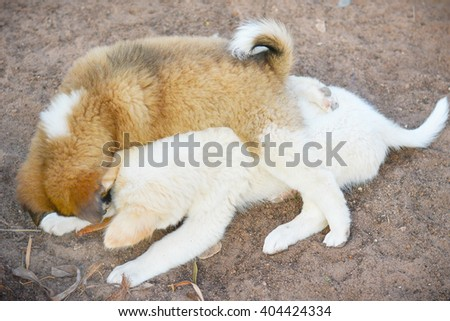 Two puppies playing outdoor. - stock photo