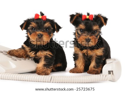 Two puppies sitting by the phone isolated on white - stock photo