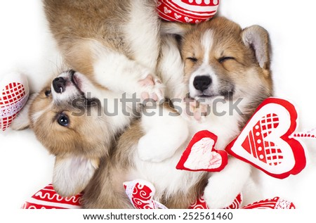 two puppies sleep in each other's arms - stock photo