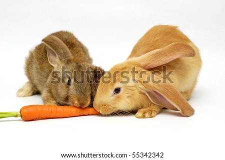 two rabbit eating the carrot on the white background - stock photo