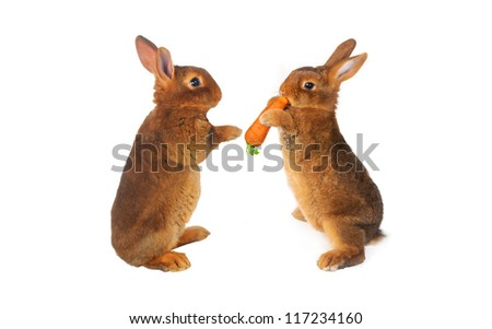 two rabbit with carrot in paws ���®n a white background - stock photo