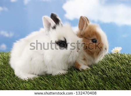 Two rabbits bunnies on green grass - stock photo