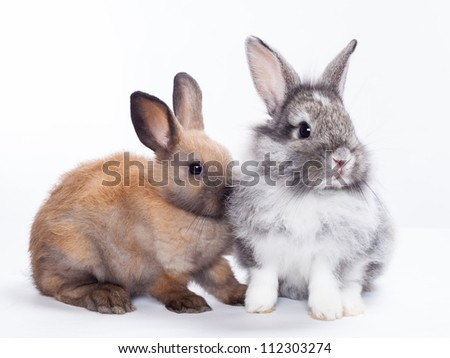 Two rabbits bunny isolated on white background