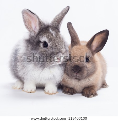 Two rabbits bunny isolated on white background - stock photo