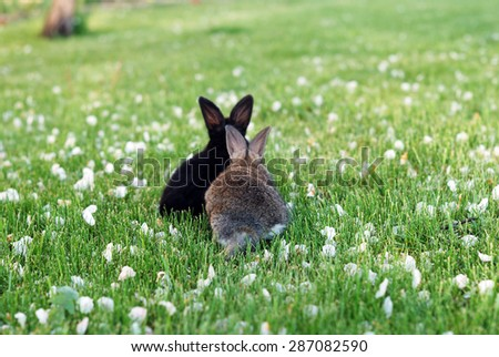 Two rabbits go together - stock photo