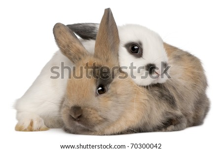 Two rabbits in front of white background - stock photo
