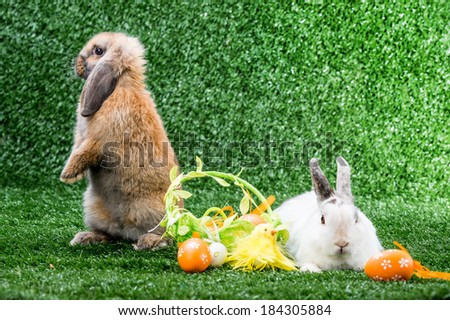 two rabbits on a green lawn with a basket of eggs