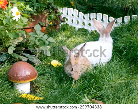 Two rabbits on green, juicy herb near by mushroom - stock photo