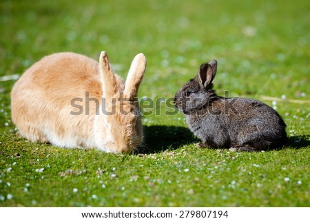 two rabbits outdoors - stock photo