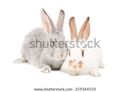 Two rabbits sitting together isolated on white background - stock photo
