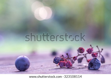 Two raisins or withered berries on a cluster in focus, rest blurred, Withered grape cluster artistic selective soft focus background  - stock photo
