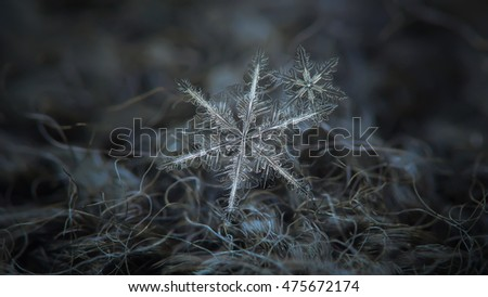 Two real snowflakes in cluster at dark grey wool background. This is macro photo of stellar dendrite crystal with complex and elegant structure. Horizontal panoramic version with free space at sides.