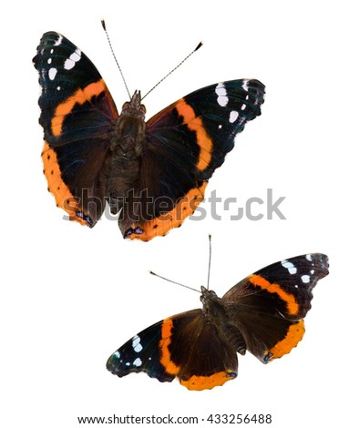 Two Red Admiral butterflies (Vanessa atalanta) isolated on a white background with a clipping path - stock photo