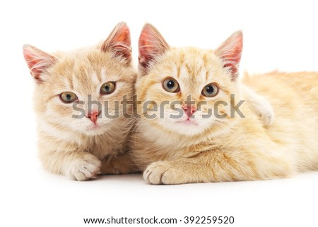 Two red cats isolated on a white background.