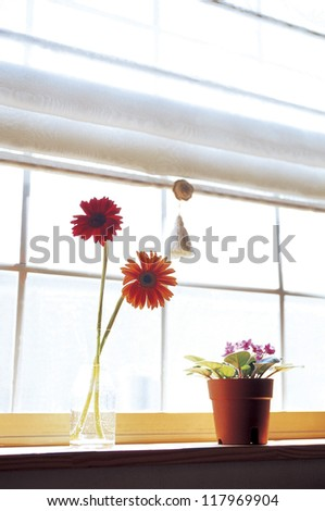 two red flowers filling a small cup with water and a pot of purple flowers by the windows