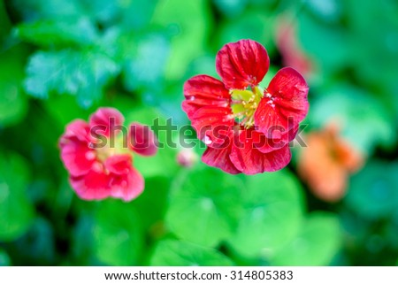 Two red flowers on a green background