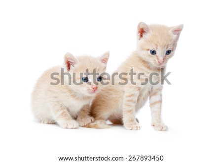 Two red-haired kittens. Isolated on white background - stock photo