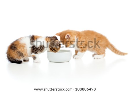two red kittens lap milk from bowl - stock photo