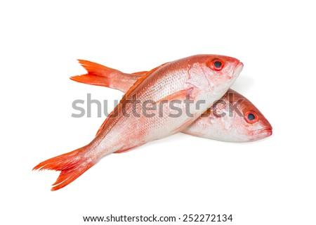 Two red snapper whole fresh fish, Lutjanus campechanus, a species of snapper native to the western Atlantic Ocean including the Gulf Mexico. wild caught, product of USA, isolated on white background.  - stock photo
