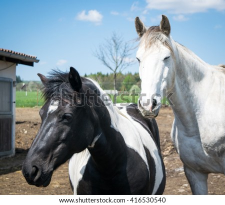 Two relaxing horses together - stock photo