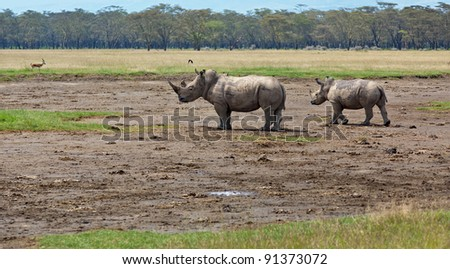 Two rhinoceros at Lake Nakuru National Park - Kenya - stock photo