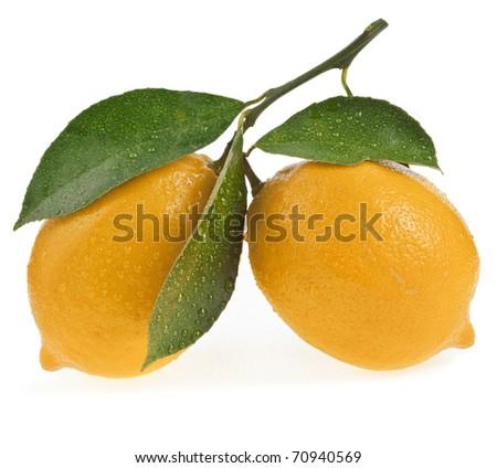 Two Ripe Lemon isolated on a white background - stock photo