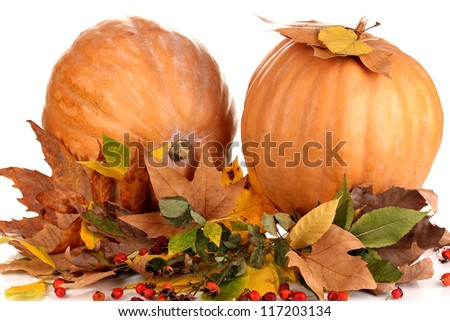 Two ripe orange pumpkins with yellow autumn leaves isolated on white close-up