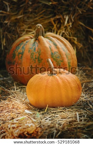Two Ripe Pumpkins on a Hay