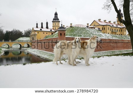 Two russian wolf hounds with Nesvizh Castle and park complex of princes Radziwill at background, Republic of Belarus - stock photo