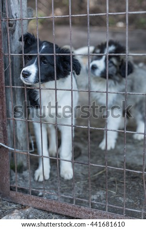 Two sad puppy locked in the cage. - stock photo