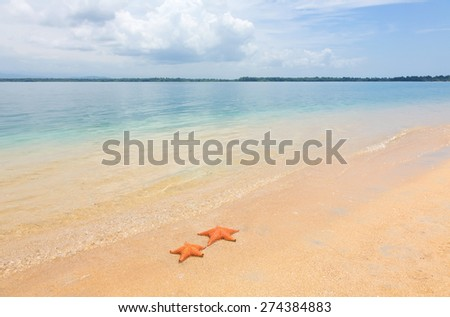 Two sea starfish on the tropical sand