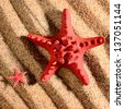 two sea stars on the sandy beach - stock photo